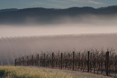 Sunrise over Yarra Valley In Winter Stock Images