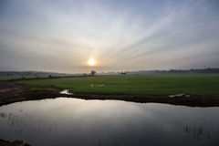 Sunrise at paddy field Stock Photography