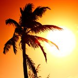 Sunrise palm Royalty Free Stock Photos