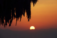 Sunrise and Palm Stock Photography