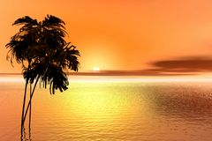 Sunrise. Palm Royalty Free Stock Photo