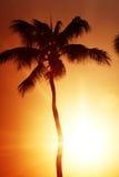 Sunrise palm Royalty Free Stock Photography