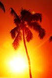 Sunrise palm Royalty Free Stock Images