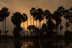 Sunrise palm tree Royalty Free Stock Photos