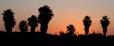 Sunrise with palm trees Royalty Free Stock Photos