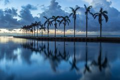 Sunrise and palm trees. Sunrise at Deering Estate with clear reflection of palm trees on the water Stock Photo