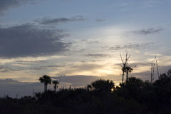 Sunrise with palmetto trees, clouds and dead trees Royalty Free Stock Photo
