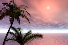 Sunrise. Palms royalty free stock photo