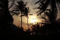 Sunrise with palms in Asia Stock Photo