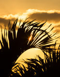Sunrise through the Palms II Stock Photography