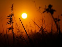 Sunrise in pampas. Sunrise view from bolivian grassland near village Rurrenabaque Royalty Free Stock Photography