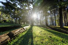 Sunrise at Pang-ung, pine forest park Royalty Free Stock Image