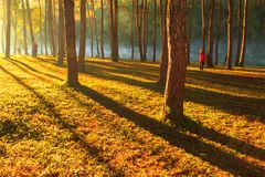 Sunrise at Pang-ung, pine forest park Stock Image