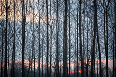 Sunrise in a park, trees as a web Stock Images