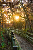 Sunrise on the pathway. Stock Images