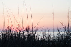 Sunrise at Pawleys. Island, SC, USA with soft sky in background and sea grass in foreground Stock Photography