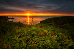 Sunrise with peonies Stock Photos