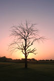 Sunrise photo with tree and yellow back ground Royalty Free Stock Image