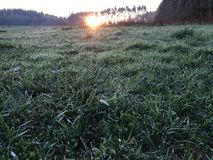 Sunrise. This picture shows morning dew and sunrise Stock Images