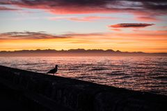 Sunrise Pigeon Silhouette royalty free stock photography