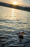 Sunrise pike fishing Stock Photo