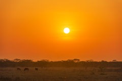 Sunrise on the Plains Royalty Free Stock Image