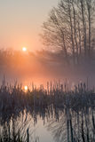 Sunrise pond and broken rush. Sunrise over a small pond with broken rush and reed Royalty Free Stock Images