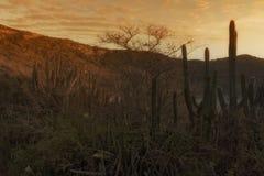 Arraial do Cabo, Cabo Frio, RJ, Brazil. The sunrise in Praia do Forno, Arraial do Cabo, RJ, Brazil Stock Photography