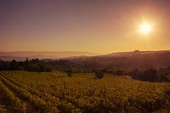 Sunrise on the Provencal vineyard. The golden hour on the Provencal vineyard with villages and mountains in the distance stock photo