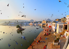 Sunrise at pushkar,rajasthan,india. The sun rising over the sacred lake of pushkar with birds flying in the air rajasthan,india stock images