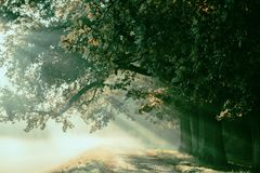 Sunrise with rays on the background of a foggy mysterious path i royalty free stock images