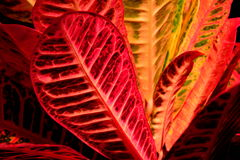 A sunrise of a RED PLANT Stock Image
