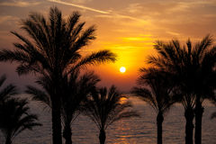 Sunrise, Red Sea Royalty Free Stock Photography
