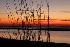 Sunrise through the Reeds on Beach Stock Images