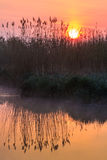 Sunrise among reeds Royalty Free Stock Image