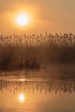 Sunrise among reeds Stock Images
