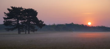 Sunrise in the Reserve Askania Nova Royalty Free Stock Images