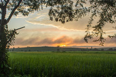 Sunrise on the rice field Stock Photography