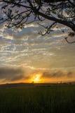 Sunrise on the rice field Stock Image