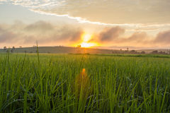 Sunrise on the rice field Royalty Free Stock Images