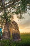 Sunrise on the rice field Stock Photo