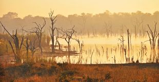 Sunrise at Ripple Creek, Zimbabwe. Ripple creek is a dam on the Bubye River in Zimbabwe and I happened to be there early one morning as the sun was rising. The Royalty Free Stock Photo