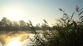 Sunrise on the riverbank. Landscape with closeup reeds on the right first plan and smoke on the water surfce