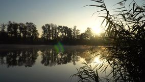 Sunrise on the riverbank. Landscape with closeup reeds on the right first plan and smoke on the water