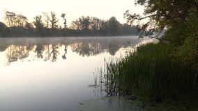 Sunrise on the riverbank. Landscape with green reeds on first plan in right side and smoke on the water