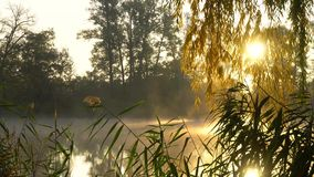 Sunrise on the riverbank. Landscape with reeds on first plan and warm sun through trees and smoke on the river