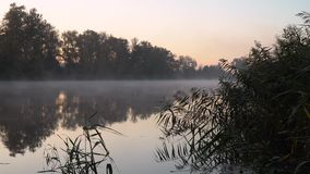 Sunrise on the riverbank. Landscape with reeds in right side on first plan and forest and smoke on the water