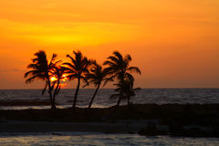 Sunrise in Riviera Maya. Rising sun and palm silhouettes on the orange sky background Stock Photos