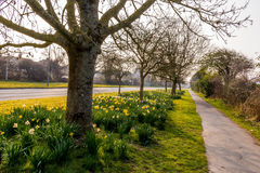 Sunrise on road side. A typical day of spring, on the edge of a street, in England Royalty Free Stock Photos