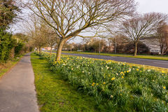 Sunrise on road side. A typical day of spring, on the edge of a street, in England Stock Images